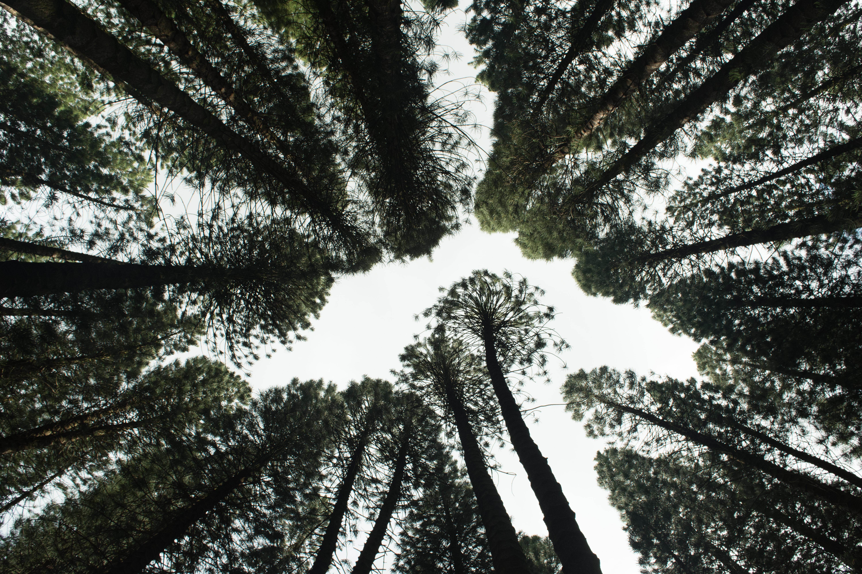 22 mai : la Journée internationale de la biodiversité